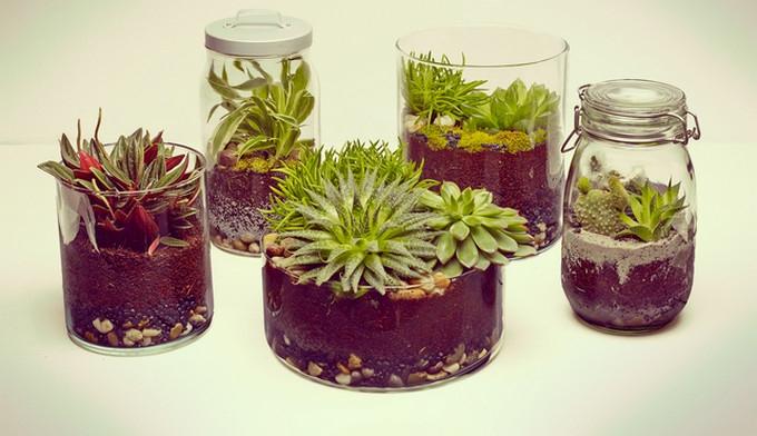 A mini garden for you!