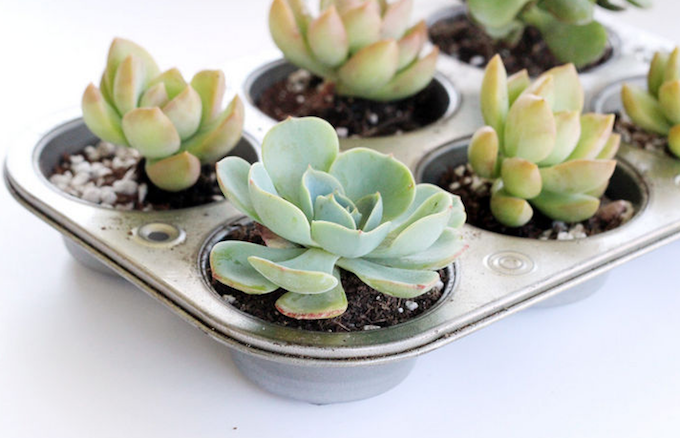 Pic: AnnMarieLoves for a DIY muffin tin planter tutorial