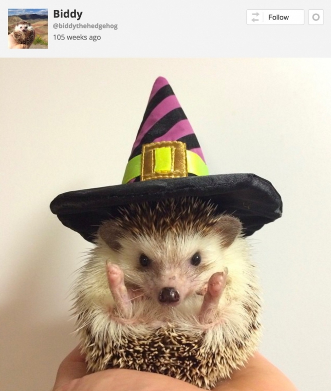 Hedgehog Halloween witches costume