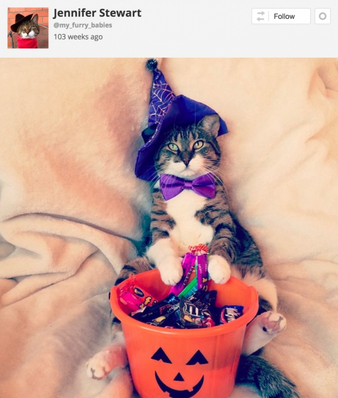 Cat with Halloween treat bucket