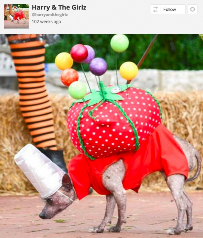 Dog in pin cushion Halloween costume