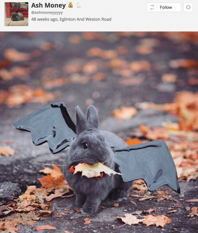 Rabbit in bat Halloween costume
