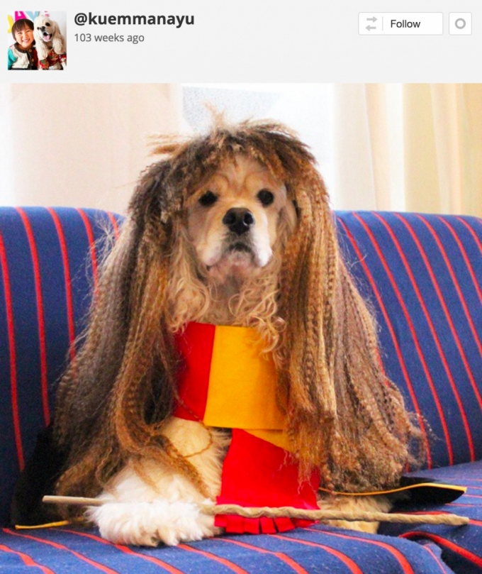 Dog in Hermione Halloween costume