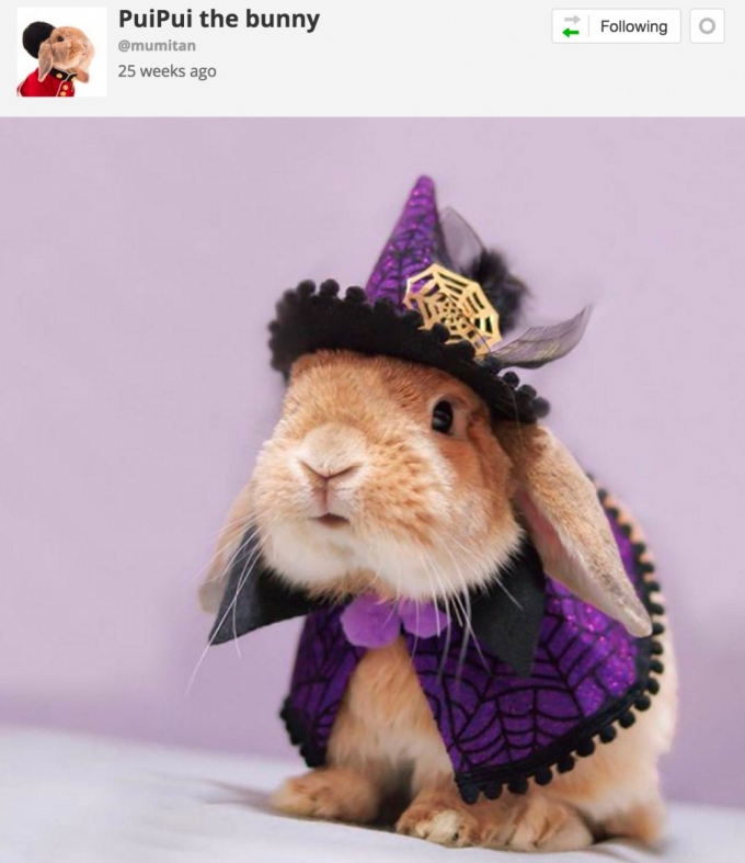 Bunny in witches Halloween costume