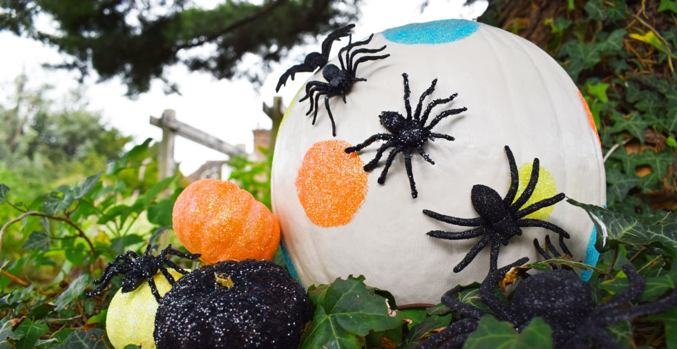 Will Our No-Carve Pumpkin Make You Say WOW?