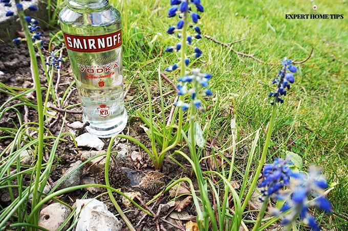 Vodka outside
