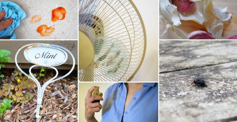 How to keep bugs away the natural way - TOP 21 methods