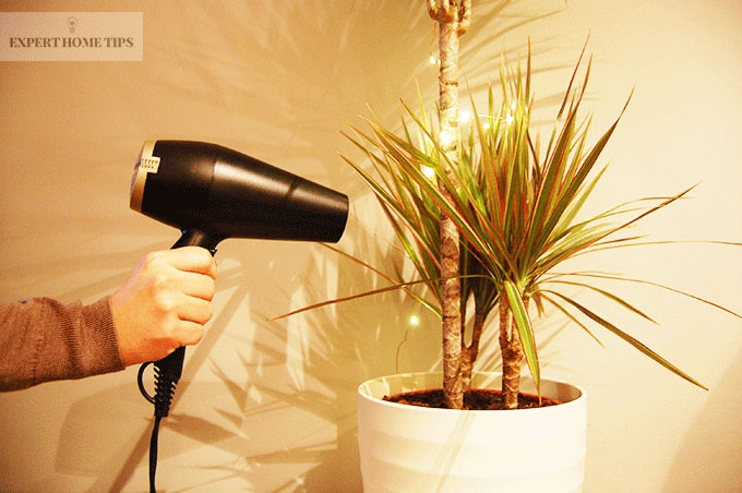 clean plants with hairdryer
