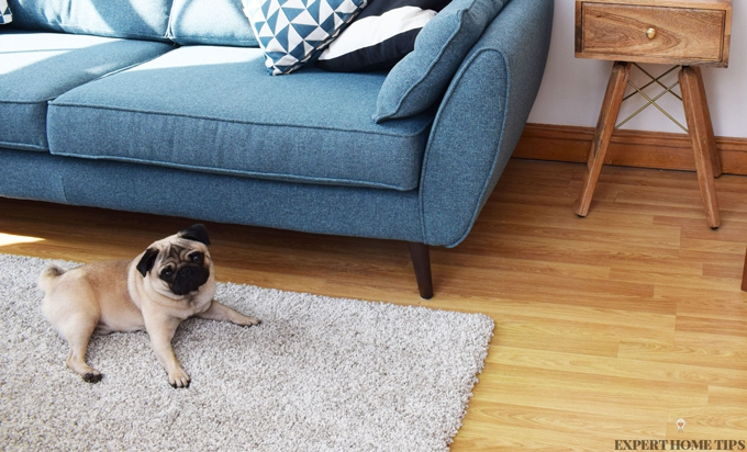 pug on rug in living room