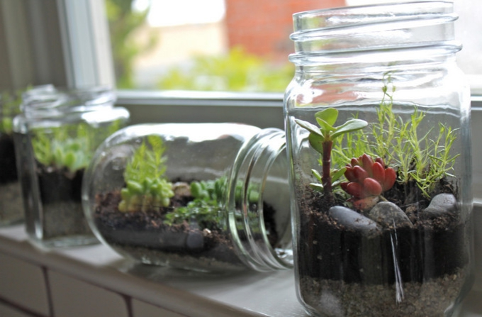 Your own mini garden - indoors!