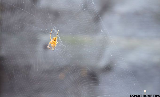 outside spider web
