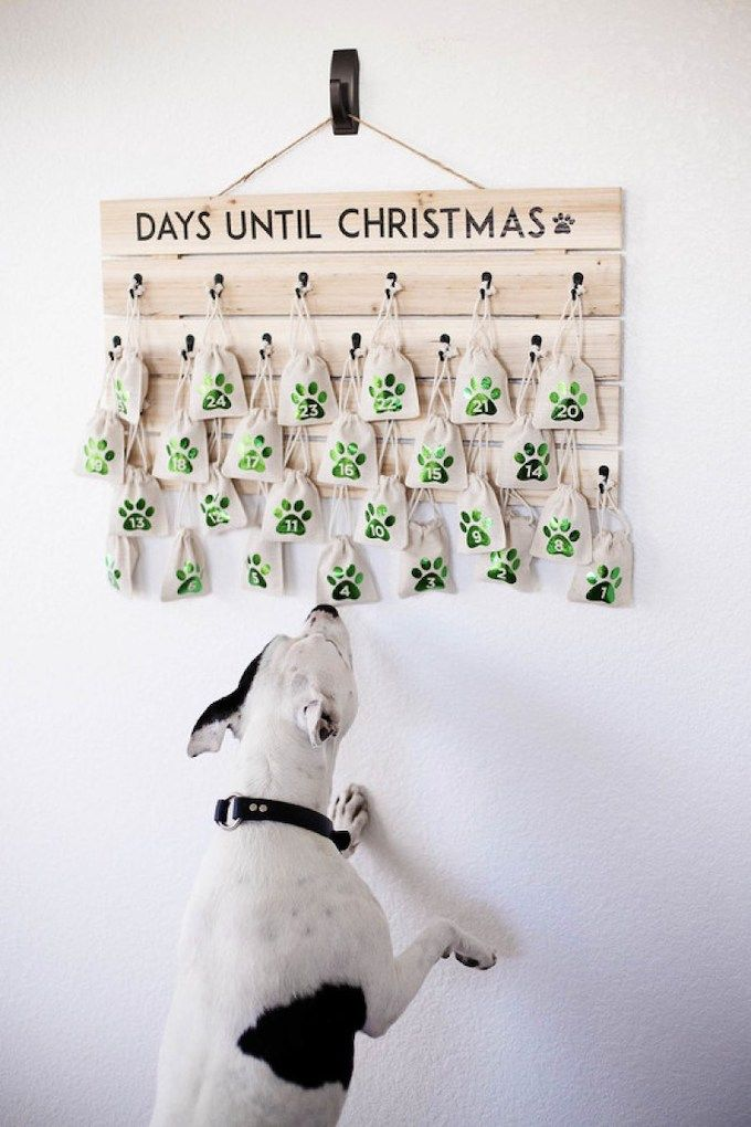 Dog treat advent calendar
