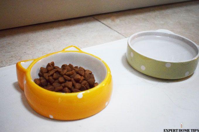 pet bowls on mat