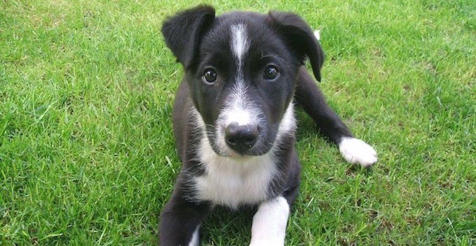 Preparing For A Puppy: 13 Essential Steps That Will ACTUALLY Help