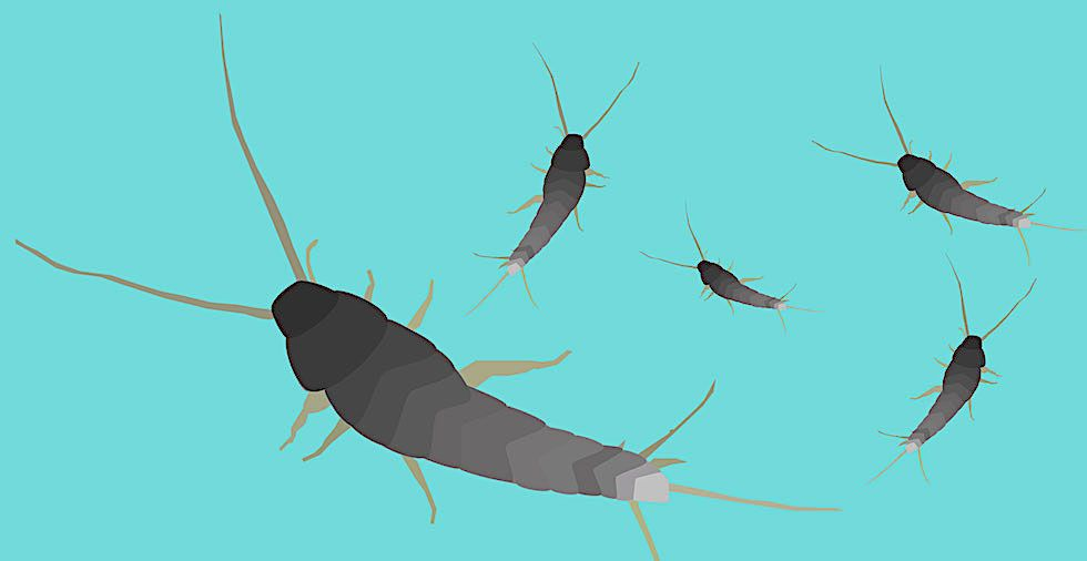 How To Get Rid Of Silverfish (13 Steps To Banish Them FOR GOOD!)